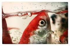 Achat de l 39 aquarium aquariophilie pratique for Achat poisson rouge nice